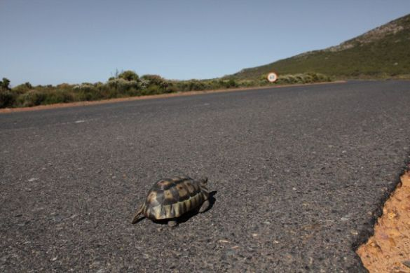 the turtle, The Cape of Good Hope